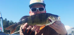 Dagens fisk värd att fotografera, slank abborre på 41cm.